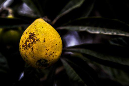 Fruit, Plant, Blur, Nature, Leaf, Summer, Food