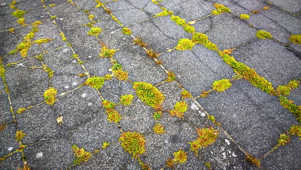 Moss, Stone Slabs, Weed, Ground, Texture, Background