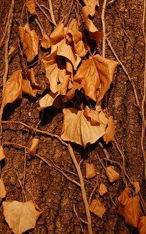 Autumn, Leaf, Foliage, Fall, Fallen, Dry, Tree, People