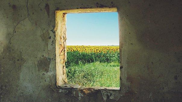 Sunflower, Window, Grunge, Ukraine, Jimmy X Rose