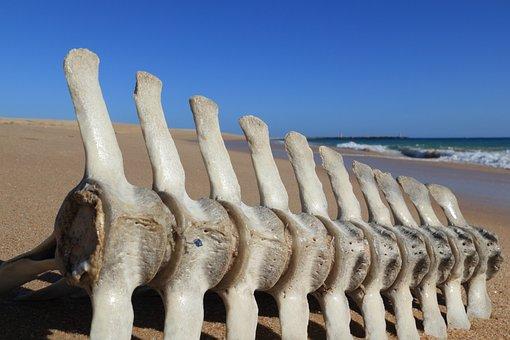 Portugal, Faro, Beach, Bone, Fish