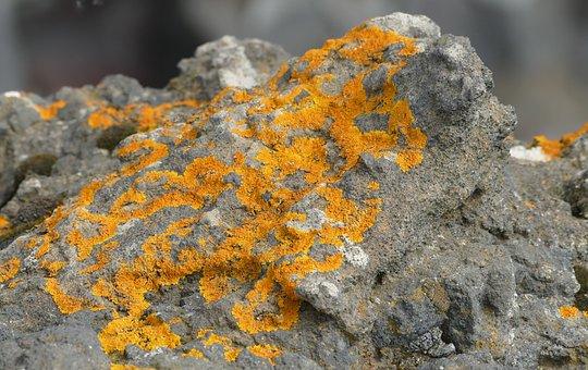 Iceland, Vik, South Coast, Nature, Lava, Beach, Lichen