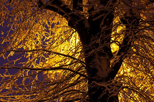 Blue, Branch, Branches, Cold, Dark, Frost, Light