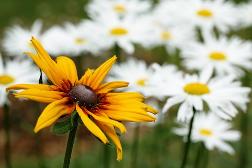 Flowers, Keywords Fotomontáž, Garden, Spring