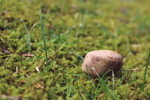 Stone, Ground, Mossy, Meadow, Nature, Background, Deco