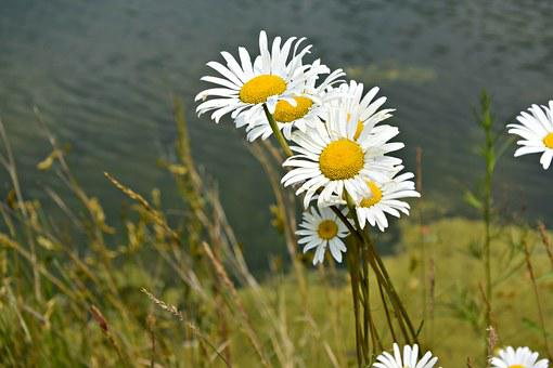Spring, Flowers, Keywords Fotomontáž, Plant