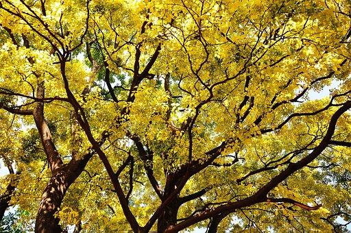 Autumn, Golden Yellow, Shade, Growth, Fertility