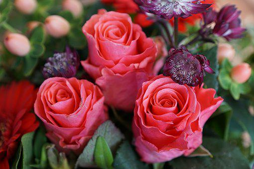 Roses, Flowers, Strauss, Blossom, Bloom, Pink, Nature