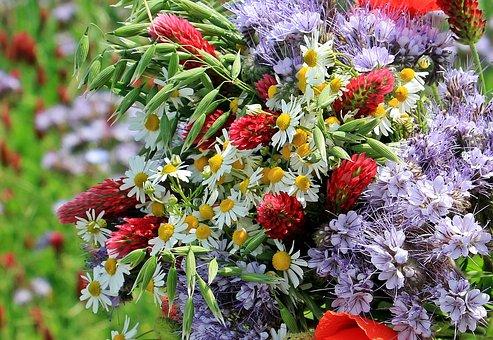 Wild Flowers, Wild Bouquet, Color, Colorful, Nature