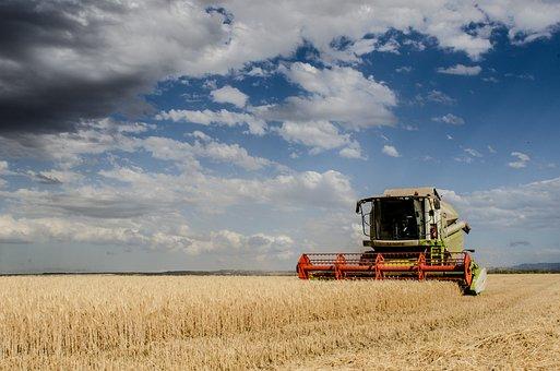 Harvest, Combine Harvester, Agriculture, Cereals