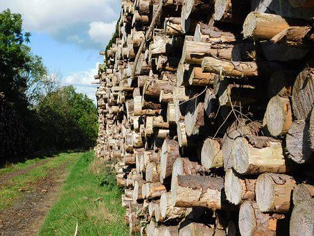 Log, Tree, Lumber, Wood, Industry, Timber, Nature