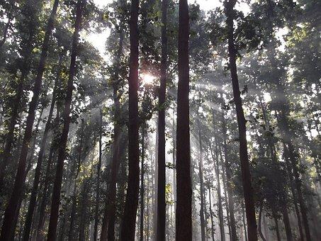 Pa, Light Shade, The Sun, Tree, Backlit, Silhouette