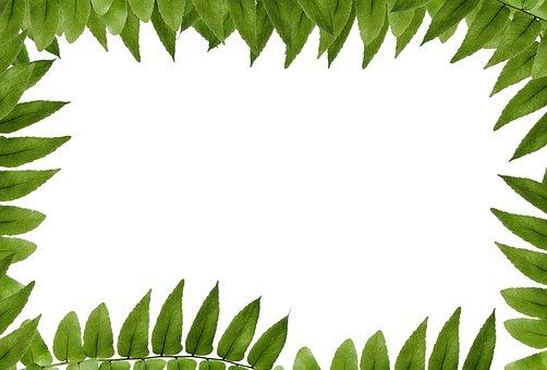 Leaf, Green, Polypody, Frame, Picture Frame, Ornament