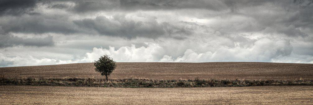 Tree, Field, Heaven, Nature, Green, Plowing, Shading