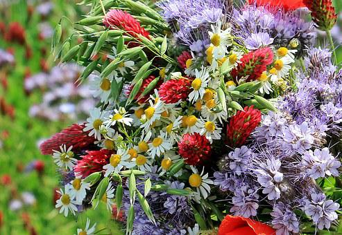 Wild Flowers, Wild Bouquet, Color, Colorful, Nature
