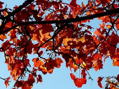 Fall Foliage, Contrast, Color, Toll, Beautiful