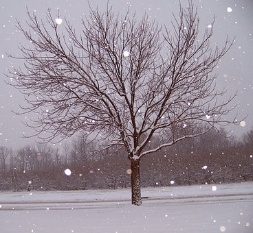 Snow, Tree, Christmas, Xmas, Season, Cold, Snowfall