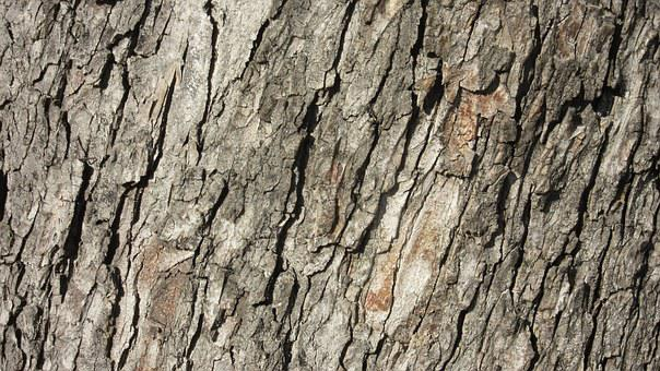 Bark, Ridge, Tree Bark, Pattern, Texture, Rauh, Nature