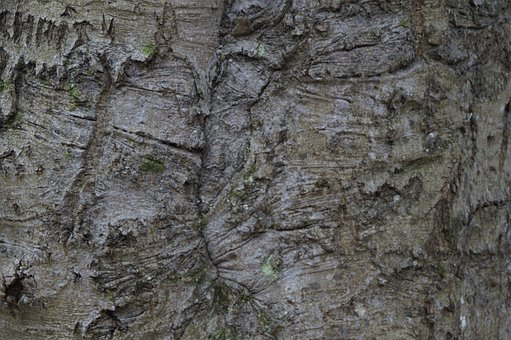 Tribe, Bark, Close, Structure, Texture, Tree, Wood