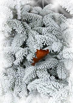 Fir, Snow, Leaf, Winter, Cold, Frost, Nature, Snowy