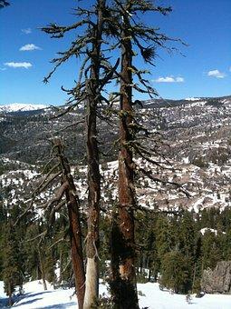 Mountains, Snowy, Landscape, Forest Dieback
