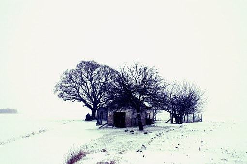 Winter, Landscape, Snow, Tree, Home, Nature, Wasteland