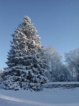Gran, Spruce, Snowy Spruce, Winter, Sweden, Roslagen
