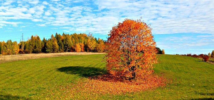 Tree, Autumn, Landscape, Nature, October, Collapse