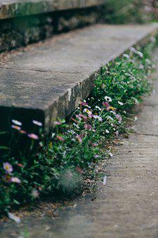 Flora, Flowers, Grass, Ground, Outdoors, Stairs, Stone