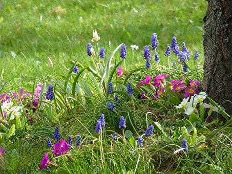 Spring, Flower Meadow, Farmer Boy, Primroses