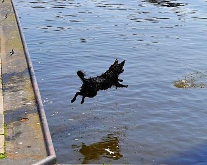 Water, Port, Dog, Jump, Get Ball, Belly Flop, Action