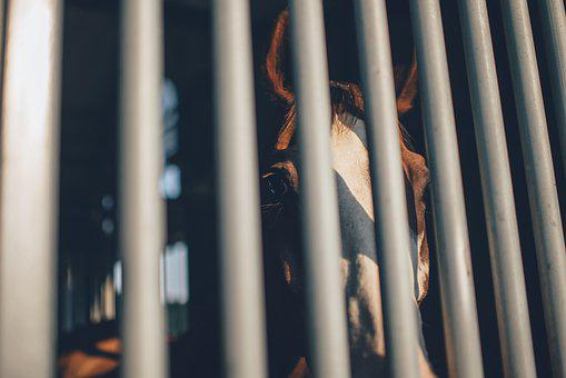 Cage, Cage Bars, Horse, Shadow