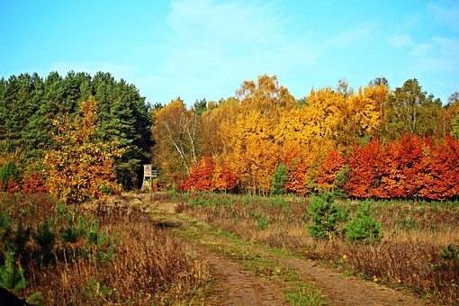 Autumn Forest, Indian Summer, Fall Foliage, Forest