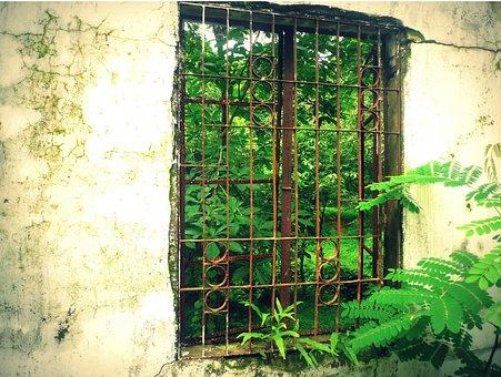 Window, Green, Behind, Wood, Facade, Wall, Nature