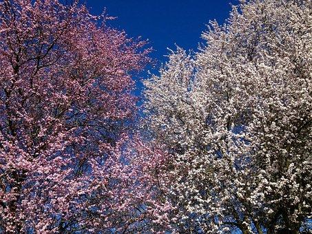 Flower, Blossom, Spring, Pollen, Summer, Tree, Joy
