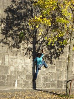 Climbs, Wall, Shadow, Tree, Climbing, Lausanne, Nature