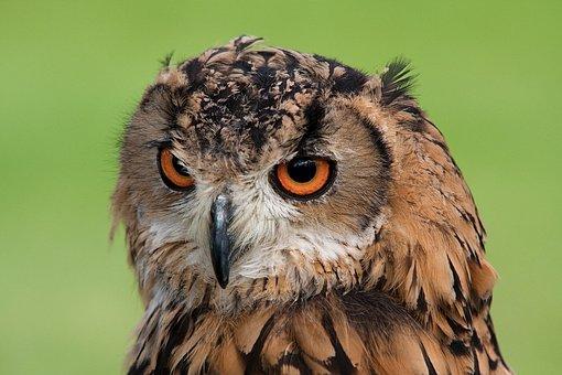 Animal, Animal Photography, Beak, Bird, Blur, Close-up