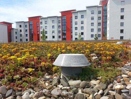 Gulli, White, Home, Flat Roof, Ventilation, Green Roof