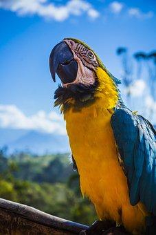 Animal, Avian, Beak, Beautiful, Bird, Blur, Bright