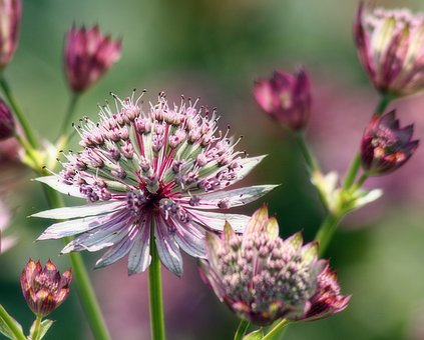 Flower, Bloom, Attractive, Botanical, Botany, Garden