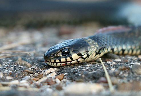 Snake, Really, Creep, Bite, Danger, Cunning, Poisonous