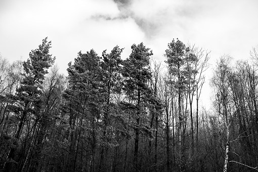 Forest, The Darkness, Scared, Horror, Dark Forest, Tree