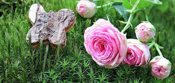 Rose, Bush Röschen, Moss, Pink Rose, Bush Florets Pink