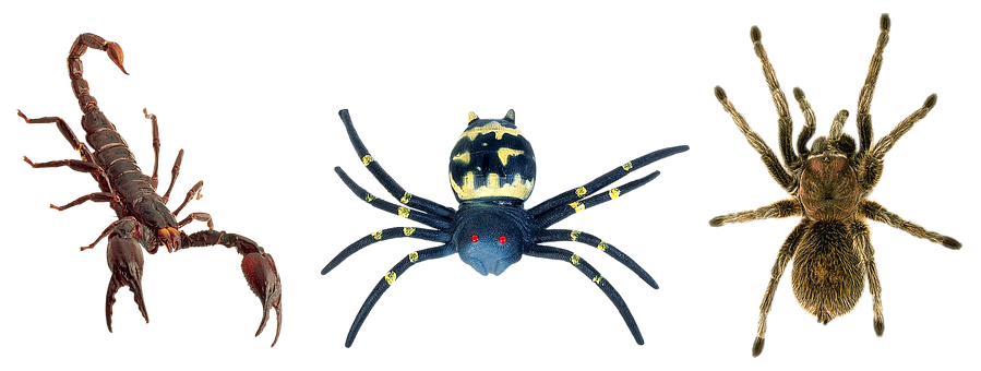 Scorpion, Spiders, Tarantula, Butafpriâ, Spider Man Toy