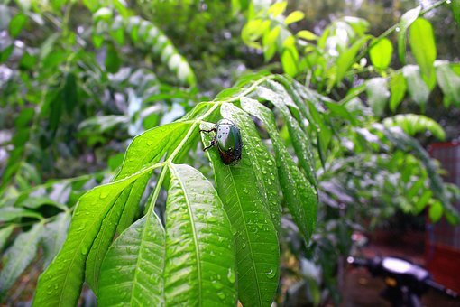Insect, Bug, Green, Thailand, Zika, Insecticide