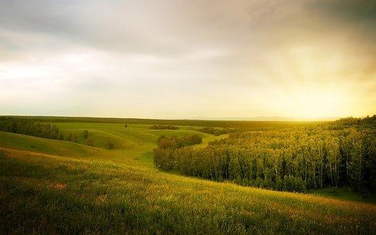 Landscape, Forest, Open Space, Field, Summer, Rain
