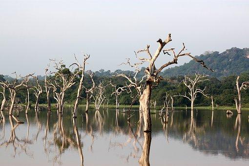 Trees, Yala, Lanka, Sri, National, Travel, Exotic