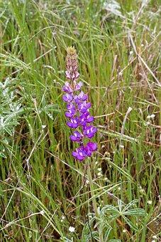 Wild, Flower, Wildfower, Wild Flowers, Plant, Spring