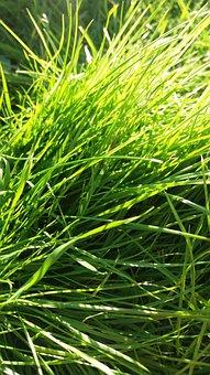 Grass, Meadow, Garden, Green, Meadowland, Nature, Land