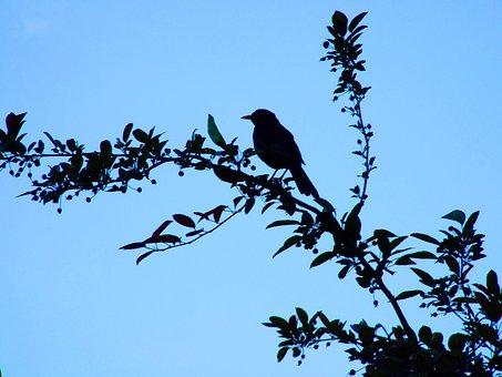 Blue, Sky, Bird, Branch, Blackbird, Nature, Bill